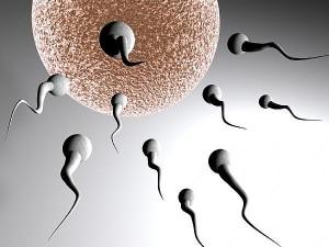 Perjalanan sperma membuahi sel telur