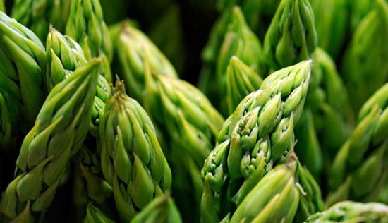 Asparagus sembuhkan ejakulasi dini
