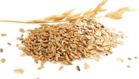 Oats gandum dapat mengobati enjakulasi dini