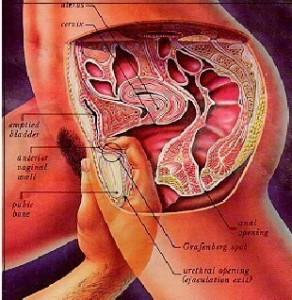 Gambar cara menemukan titik G-spot wanita