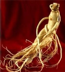 2 Jenis Herbal Untuk Meningkatkan Gairah Seks Wanita